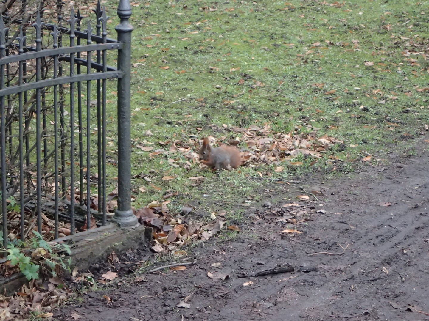 squirrel in the cemetery