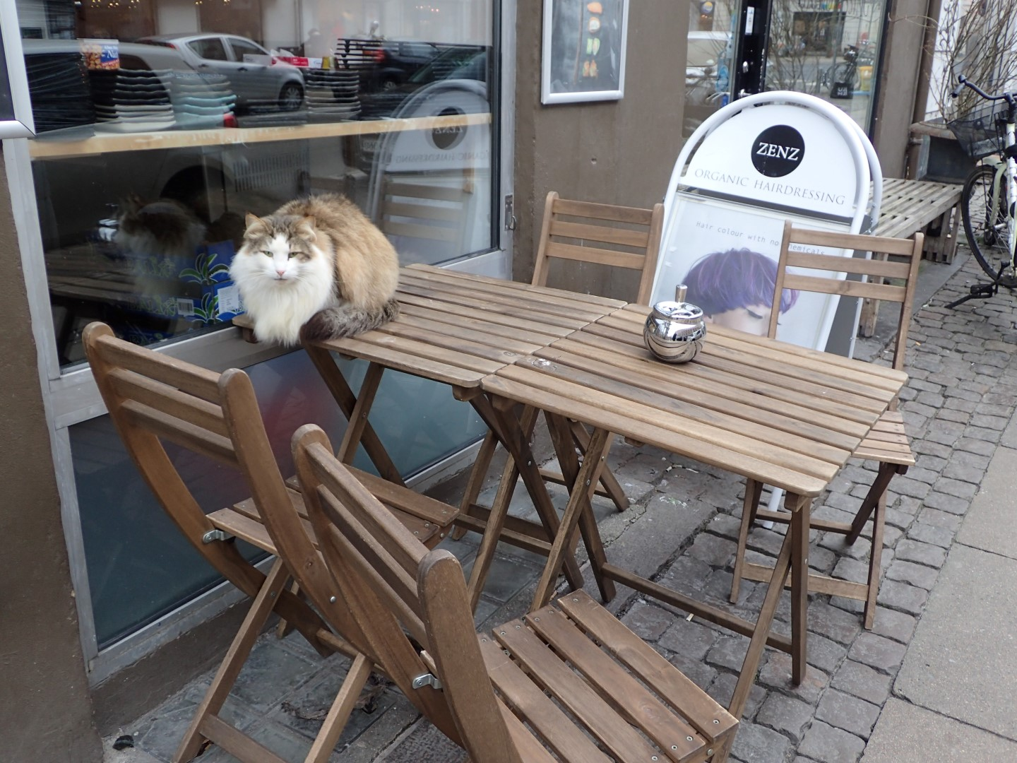 A Cat outside the Hairdresser